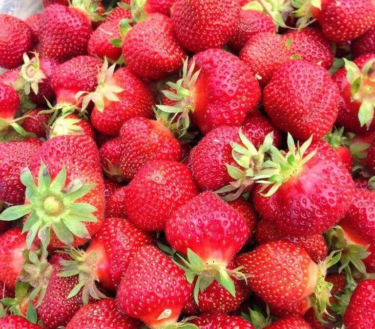 Wellness Wednesday: Strawberry Picking :)